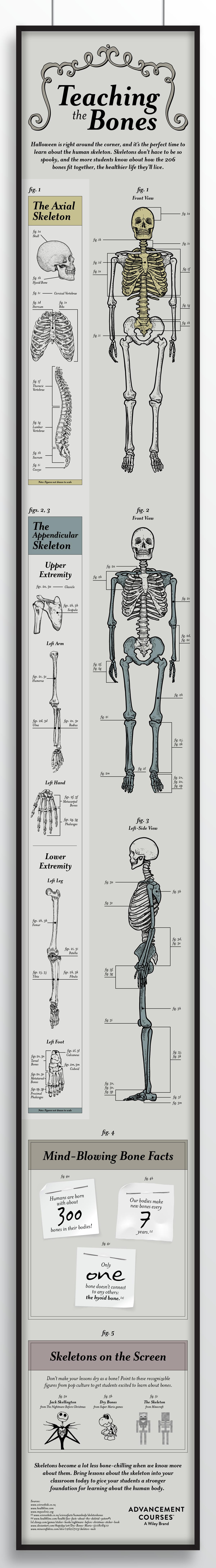 Teaching the Skeleton, Teaching the Bones, Anatomy, Classroom Aid
